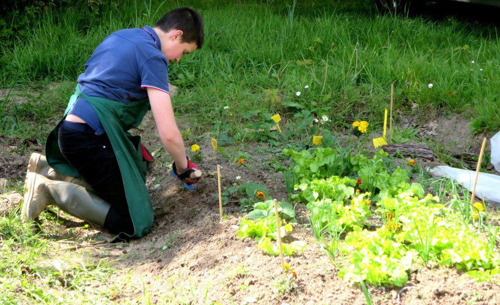 les activités au jardin en images - chemin-d-avenir cmonsite fr